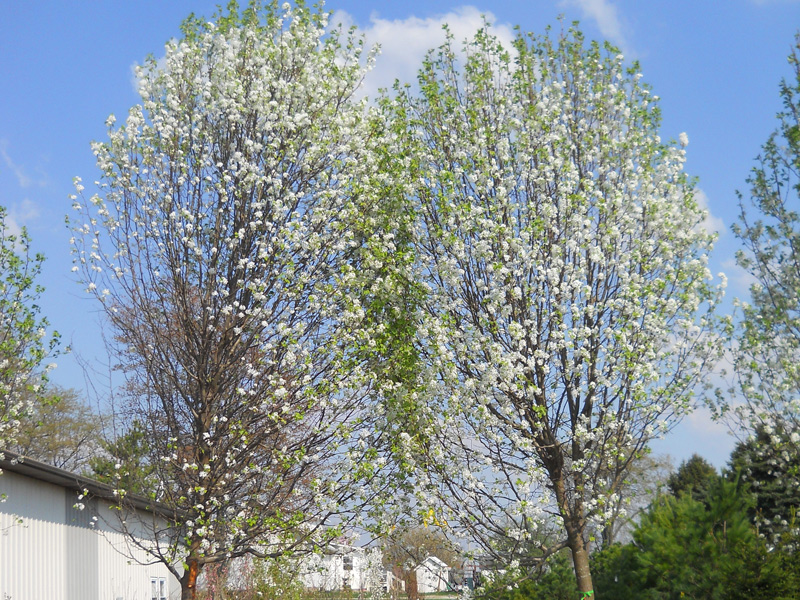bees and pear trees janie's unchanging Their eyes were watching god: metaphor analysis pear tree: in her nanny's back yard, janie lies beneath the she saw a dust-bearing bee sink into the.