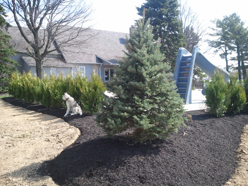 Indianapolis Trees Installed