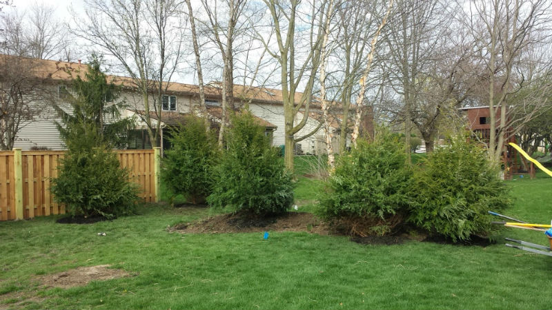 Hemlock Trees Installed